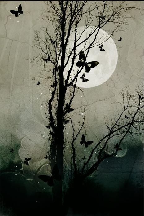 Night_Butterflies_by_silent_reverie, ფოტო ღამე
